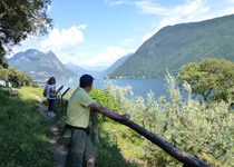 A guided tour through the olive groves of the Ticino